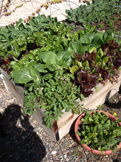 Plant a garden: Springs 's best accessory!